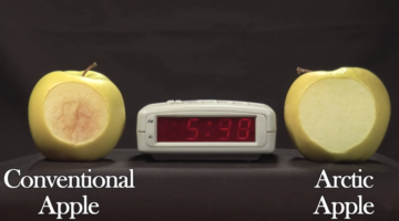 mela ogm arctic apple annerisce