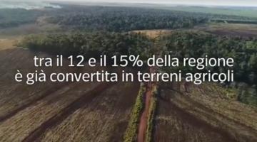 Le monocolture di soia stanno rimpiazzando la foresta del Chaco e contribuiscono all'incidenza di malattie per glisofato